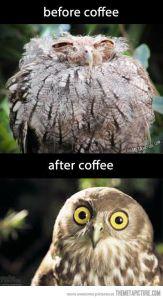 Owl needs coffee