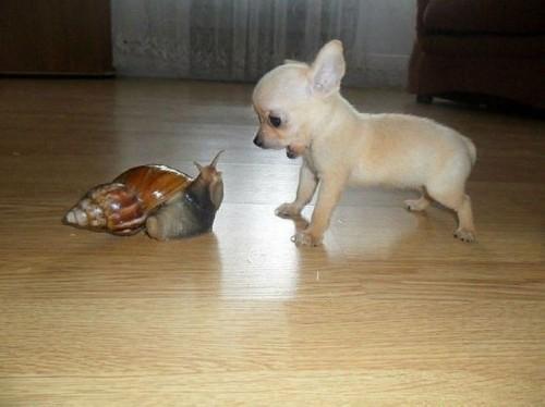 dog vs snail
